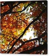 Trees In Fall Fashion Acrylic Print