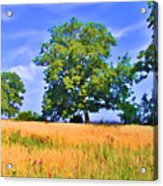 Trees In Field Acrylic Print
