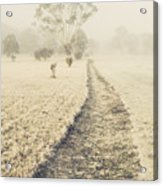 Trees In Fog And Mist Acrylic Print
