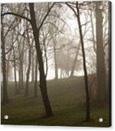 Trees In Fog Acrylic Print