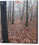 Trees In Foggy Fall Woods Acrylic Print