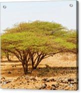Trees In Kenya Acrylic Print