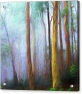 Trees in mist Acrylic Print
