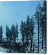 Trees In Northwest Acrylic Print
