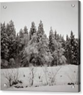 Trees In Snow Acrylic Print
