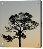 Trees In Sunset Acrylic Print