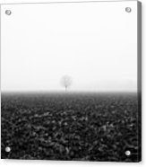 Trees In The Fog 1 Of 4 - Lombardy / Italy Acrylic Print