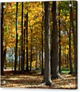 Tree's In The Forest Acrylic Print