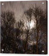 Trees In The Nigh Acrylic Print