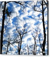 Trees In The Sky Acrylic Print