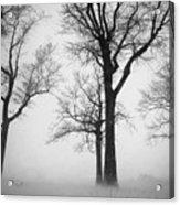 Trees In Winter  Acrylic Print