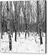 Trees In Winter Snow, Black And White Acrylic Print