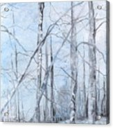 Trees In Winter Snow Acrylic Print
