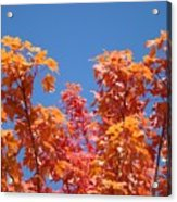 Trees Landscape Art Print Fall Tree Leaves Baslee Troutman Acrylic Print