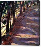 Trees Line The Road Acrylic Print