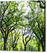 Trees Of Central Park, Nyc Acrylic Print