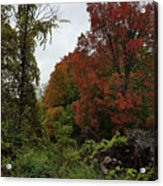 Trees Of Colorful Leaves In Autumn Mi Acrylic Print
