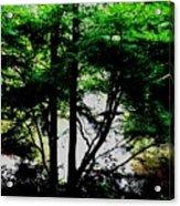 Trees Of Spring Acrylic Print