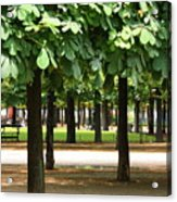 Trees Of Tuilieres Acrylic Print