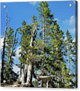 Trees On The Edge 1 Acrylic Print