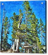 Trees On The Edge 2 Acrylic Print