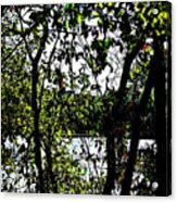 Trees Over Looking Water Acrylic Print