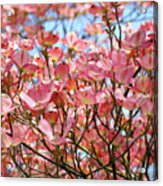 Trees Pink Spring Dogwood Flowers Baslee Troutman Acrylic Print