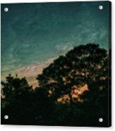 Trees - San Salvador Iv Acrylic Print