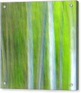 Trees Acrylic Print by Silke Magino