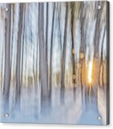 Trees, Snow And Golden Light Abstract Acrylic Print