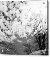 Tree's Spirit Acrylic Print