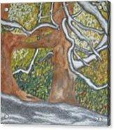 Trees Acrylic Print