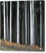 Trees Trunks Acrylic Print by Bernard Jaubert
