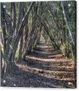 Trees Under Cover 3 Acrylic Print