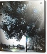 Treeson Acrylic Print