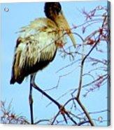Treetop Stork Acrylic Print