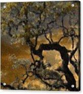 Treetop Sunset Acrylic Print