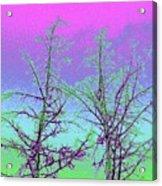 Treetops 5 Acrylic Print