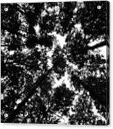 Treetops Acrylic Print