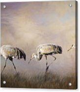 Tres Amigos Acrylic Print