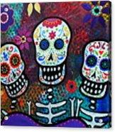 Tres Amigos Acrylic Print by Pristine Cartera Turkus
