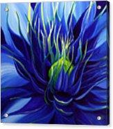 Tres Azul Acrylic Print