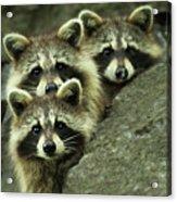 Tres Banditos Acrylic Print
