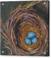 Tres Bleu Acrylic Print