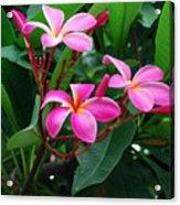 Tres Floras Acrylic Print
