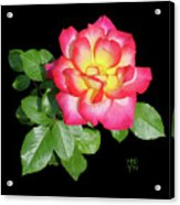 Tri-color Pink Rose2 Cutout Acrylic Print