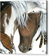 Tri Colored Pinto Horse Acrylic Print