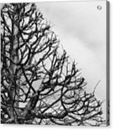 Triangle Tree Acrylic Print