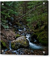 Trickling Spring Acrylic Print