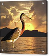 Tricolored Heron At Sunset Acrylic Print